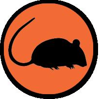 rato-3