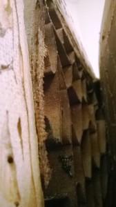 Broca destruindo porta 02 - 1