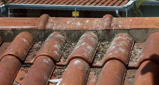pombos-fezes-telhado